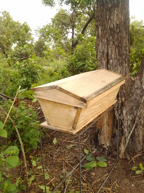 BEE KEEPING (4)