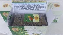 madicated herbal tea (2)