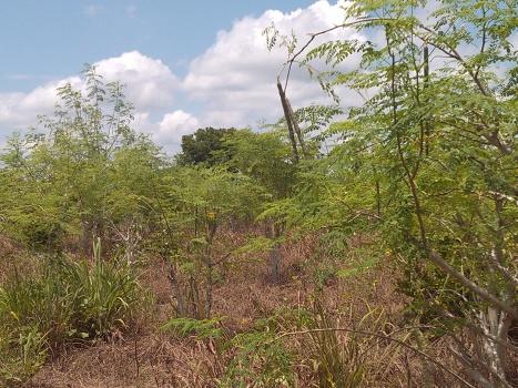ORGANIC FARMING (1)