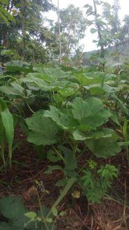 ORGANIC FARMING (4)