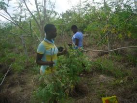 ORGANIC FARMING (5)