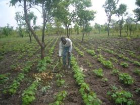 ORGANIC FARMING (6)